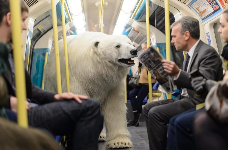 A replica polar bear on a tube train is spotted in London to mark the launch of TV programme. An 8 ft long, fully animated 'adult male polar bear' was unleashed on the freezing streets of London this morning to mark the launch of Sky Atlantic's hotly anticipated arctic crime drama 'Fortitude'. The bear was spotted at locations across the capital, including Hampstead Heath, Charing Cross Underground and the South Bank. (Daniel Lewis/REX)